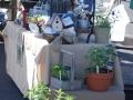 2012_cgwa_plantfair_0025