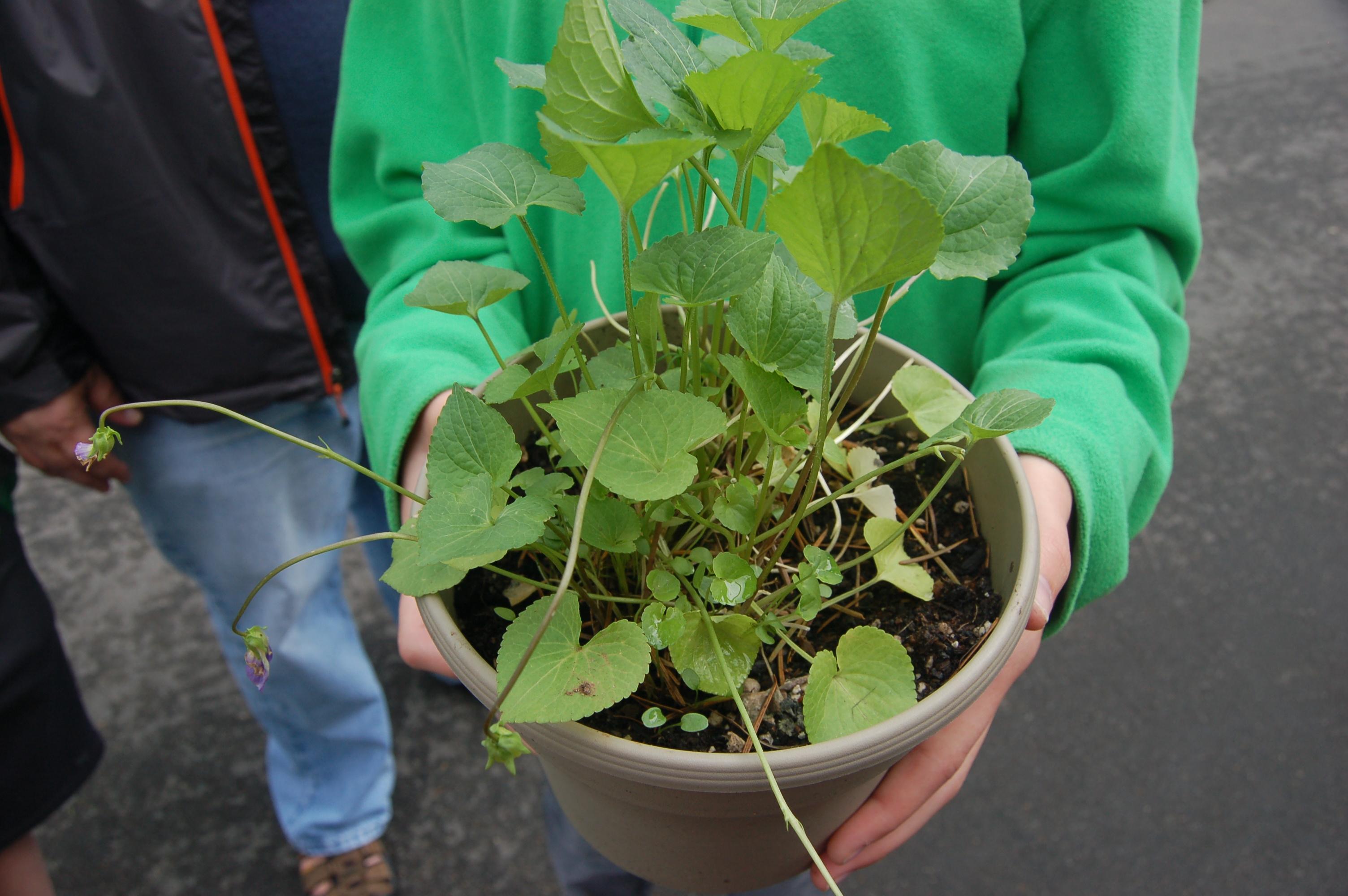 Camas Plant and Garden Fair 2014 (128)