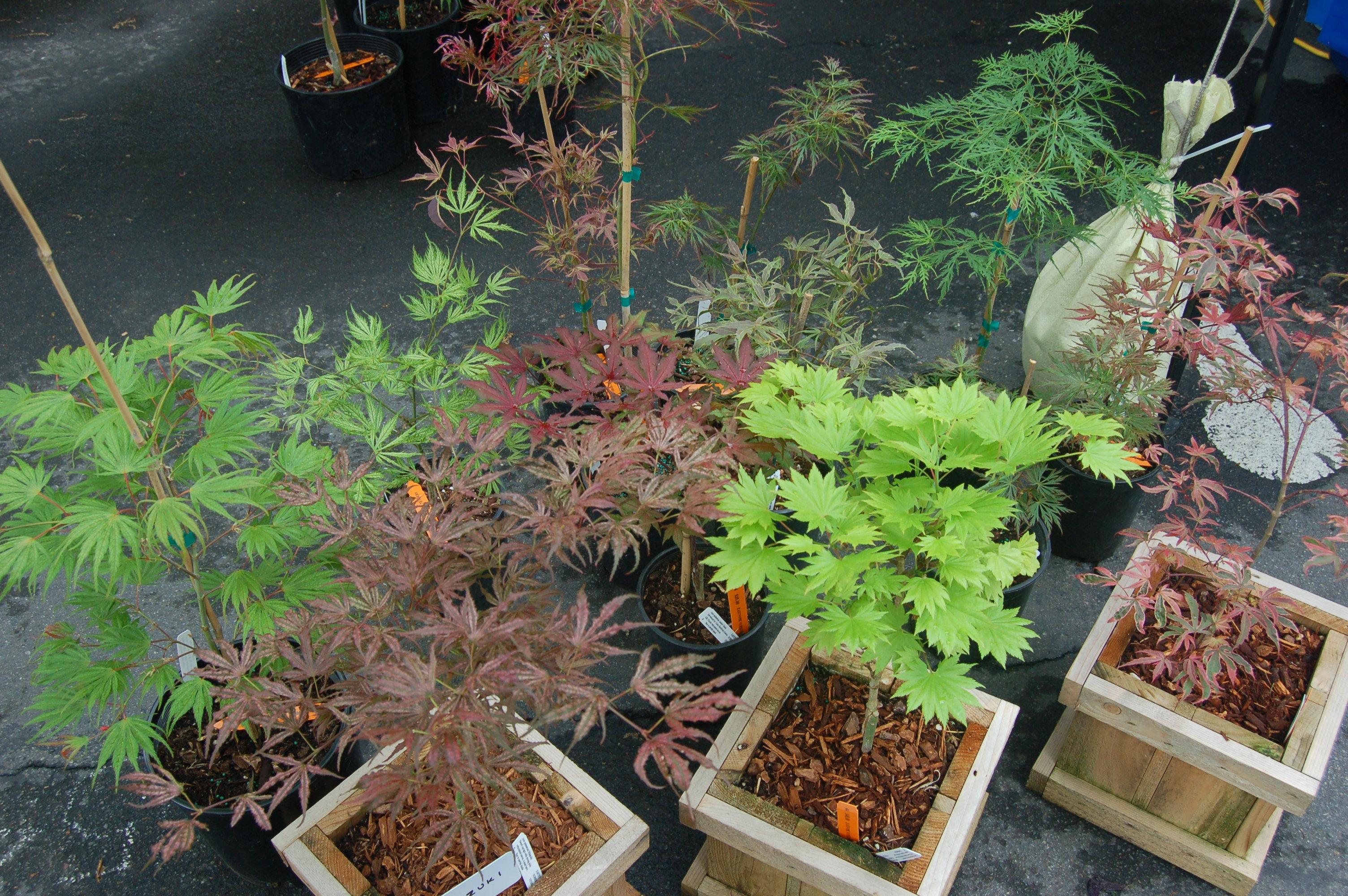 Camas Plant and Garden Fair 2014 (183)
