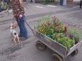 Camas Plant and Garden Fair 2014 (135)