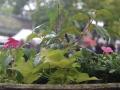 Camas Plant and Garden Fair 2014 (149)