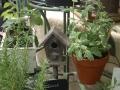 Camas Plant and Garden Fair 2014 (219)
