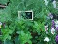 Camas Plant and Garden Fair 2014 (97)