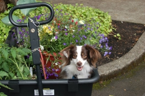 dog in wagon